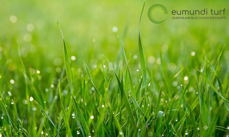 Eumundi Turf grass and logo